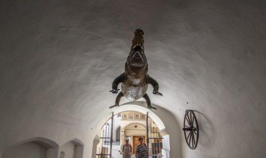 Stará radnice v Brně, krokodýl