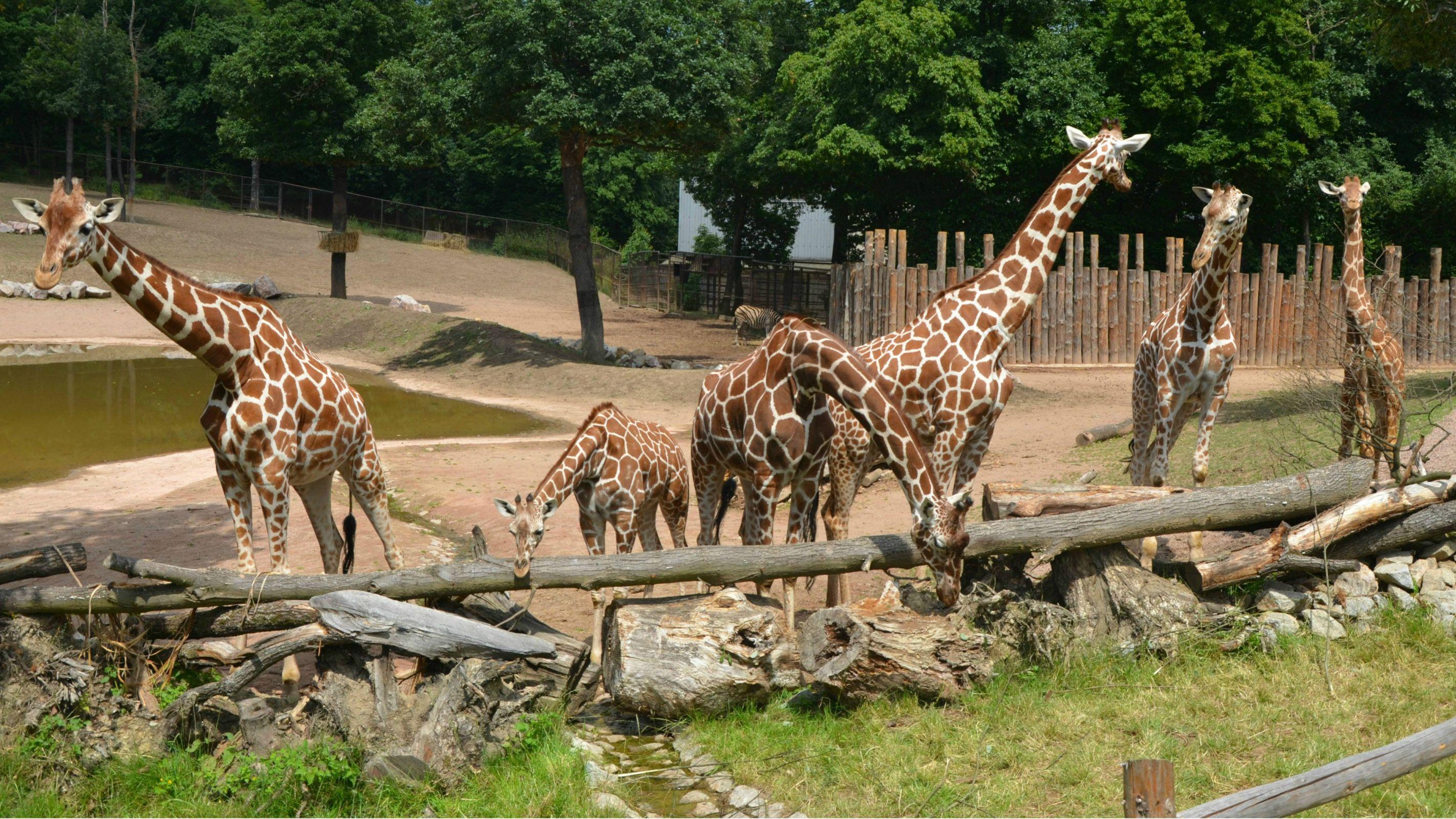 The Brno Zoo in Brno