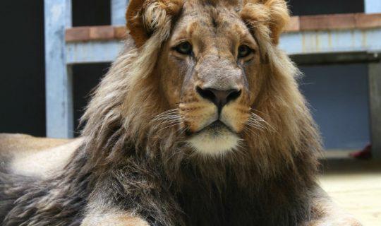 lvi v zoo