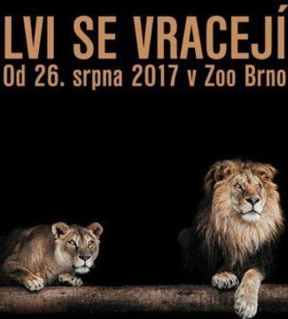 Lvi se vracejí do Zoo Brno