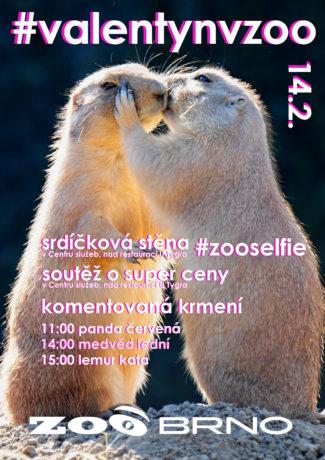 Valentýn v Zoo Brno