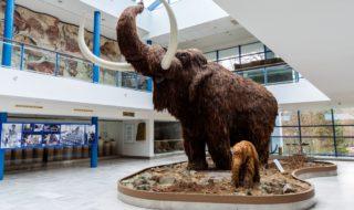 Moravské zemské muzeum - Pavilon Anthropos
