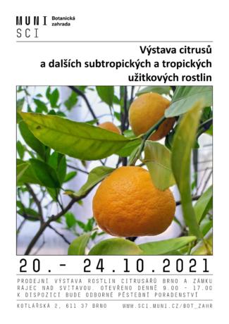 výstava citrusů