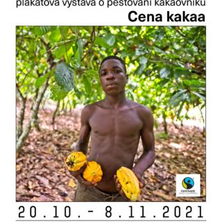 pěstování kakaa